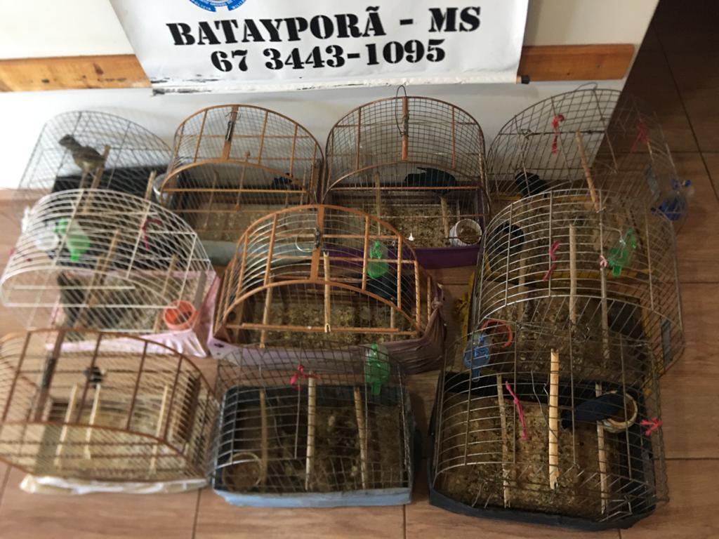 Polícia Militar Ambiental de Batayporã autua em R$ 9,5 mil infrator por manter 10 aves silvestres em cativeiro