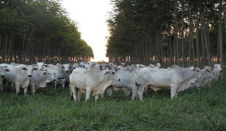 MS possui terceira maior área agrícola financiada pelo Programa Agricultura de Baixo Carbono no país