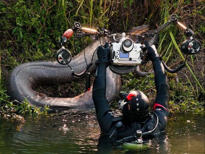 Sucuris gigantes são flagradas durante expedições de fotógrafos subaquáticos em rios de MS